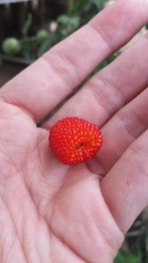 Raspberry-like
