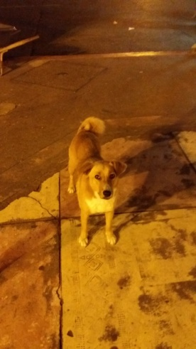 Dog who wants an empenada